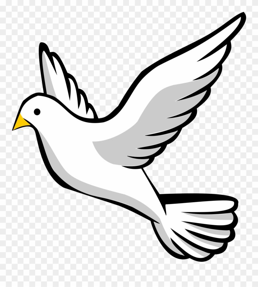 Dove pictures clip.
