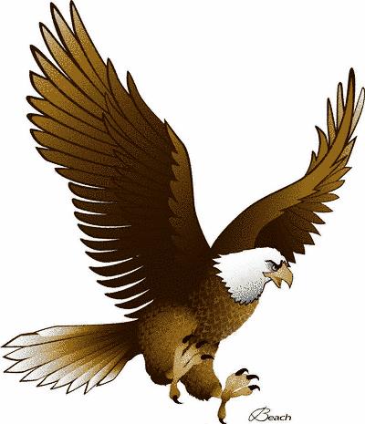 Free eagle flying.