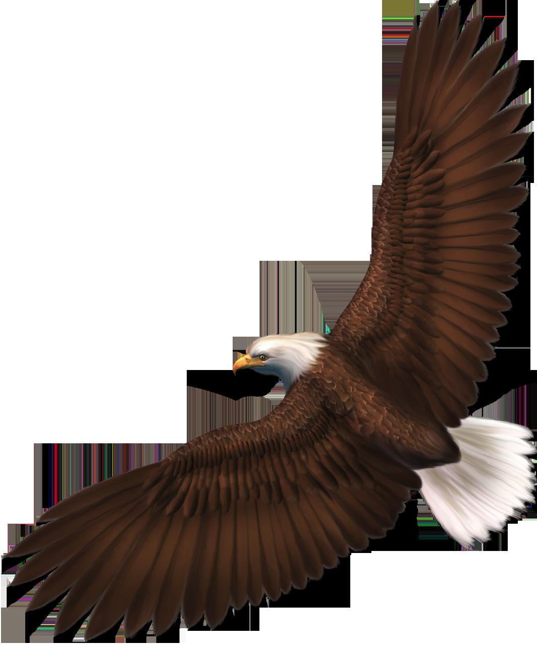 Transparent eagle png.