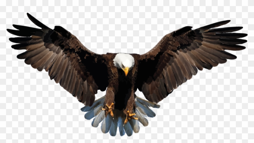 Bald eagle png.