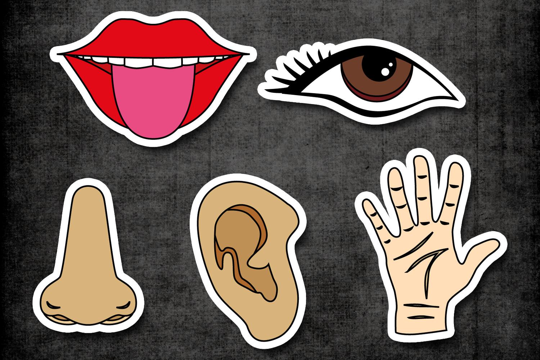 Five senses clipart tongue.