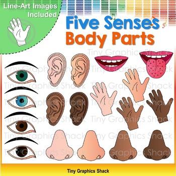 Ears clipart five senses. Body parts clip art