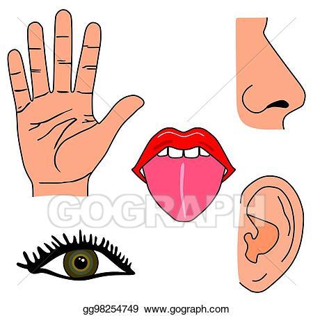 Ears clipart five senses. Stock illustration human set