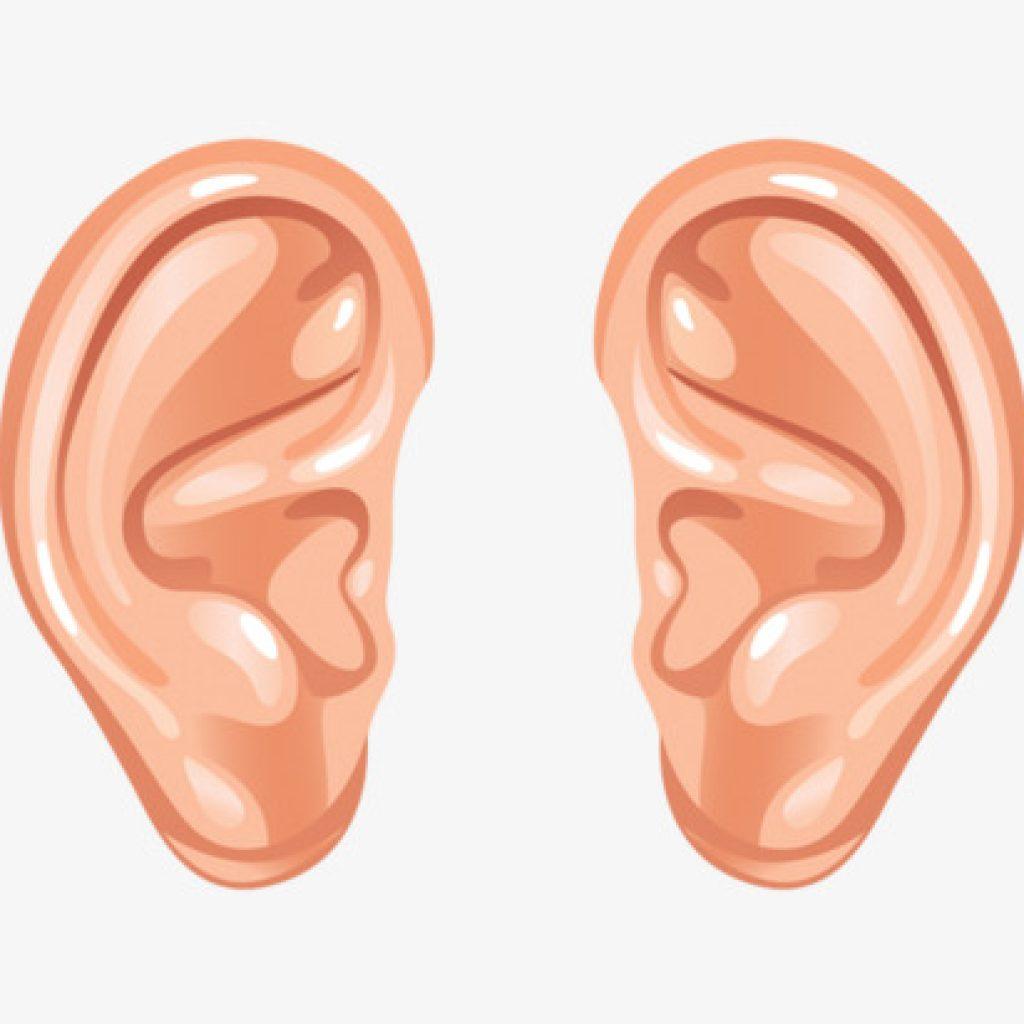 Free ear clipart.