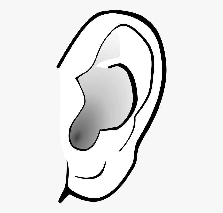 Left ear clipart.