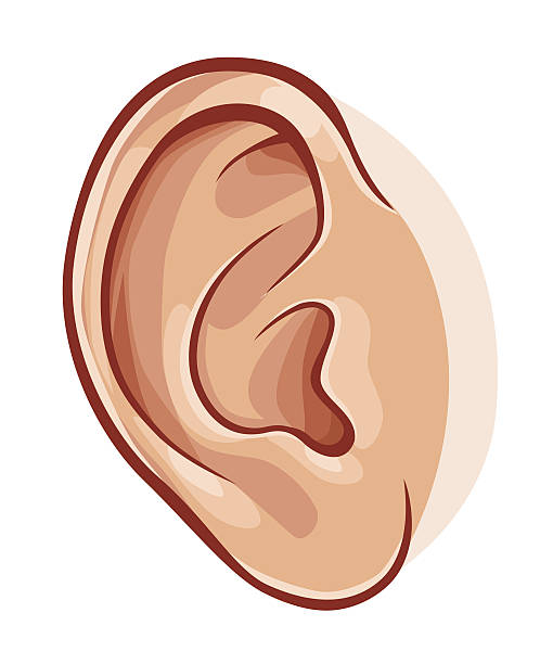 Pair ears clipart.