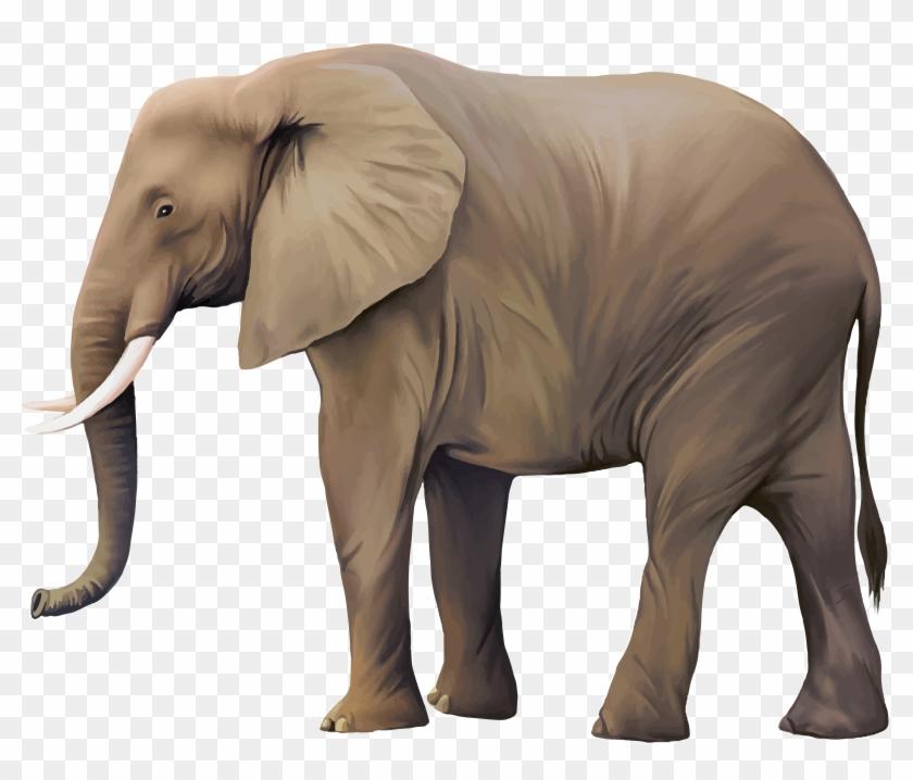 Animal illustrator illustration.