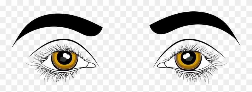 Human eye drawing.