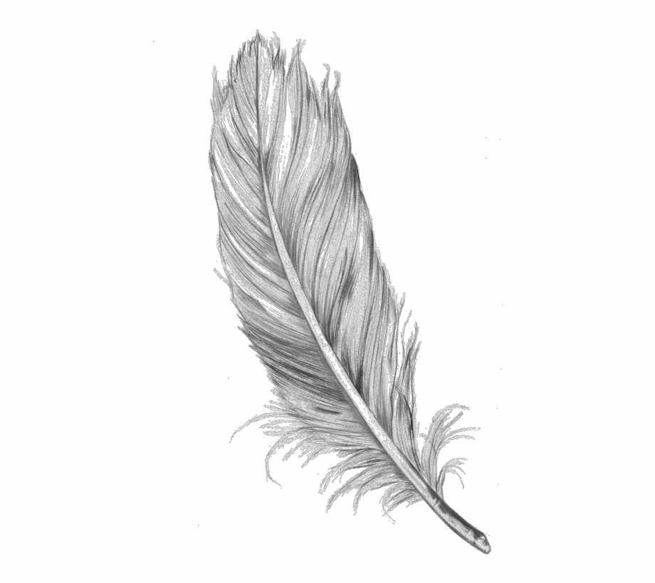 Feather clipart tumblr.