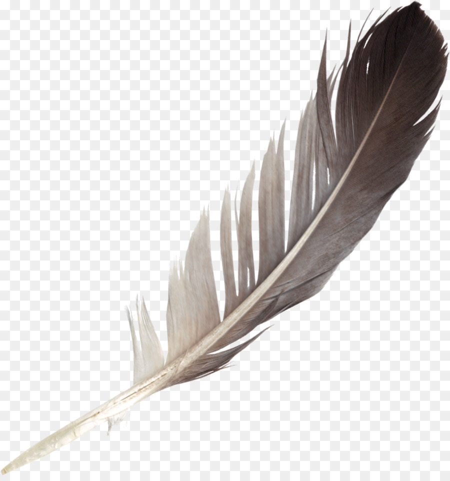 feather clipart bird