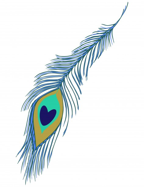 Feather clipart peacock. Free stock photo public