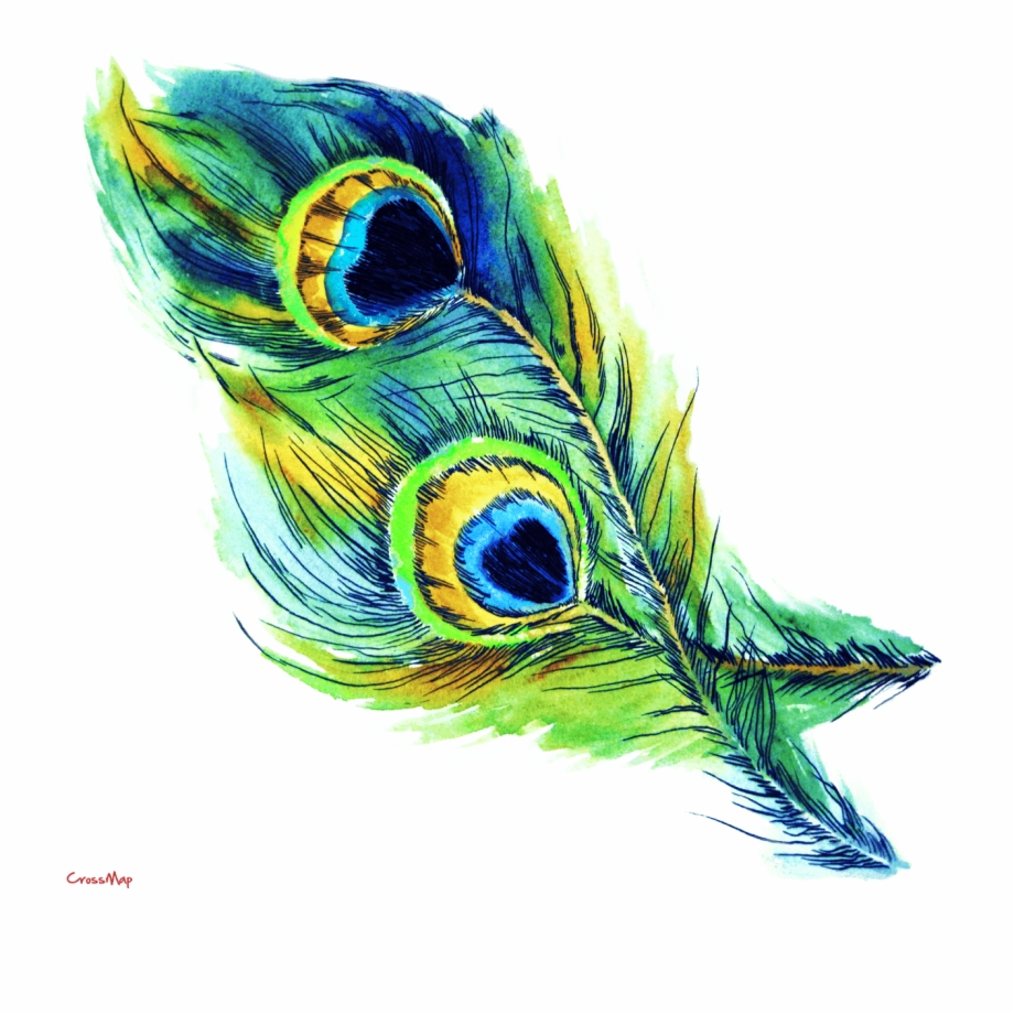 Feather clipart peacock. Colorful no background bird