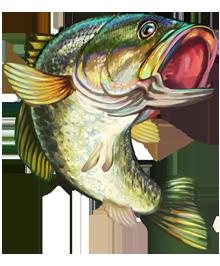Free Bass Fish Cliparts, Download Free Clip Art, Free Clip