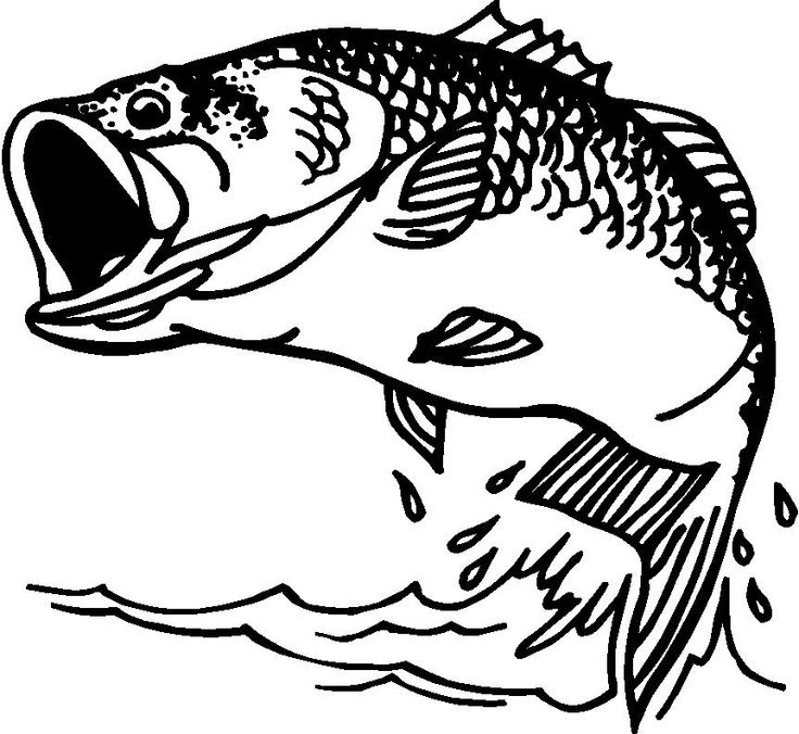 Free Bass Fish Cliparts, Download Free Clip Art, Free Clip