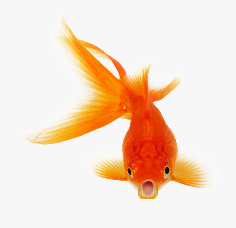 Real fish clipart.