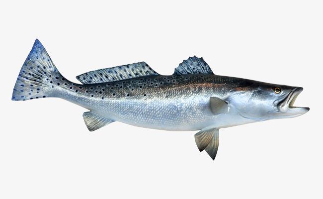 Big fish fish.