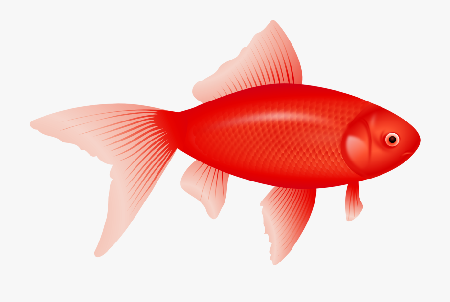 Cute Red Fish Clipart