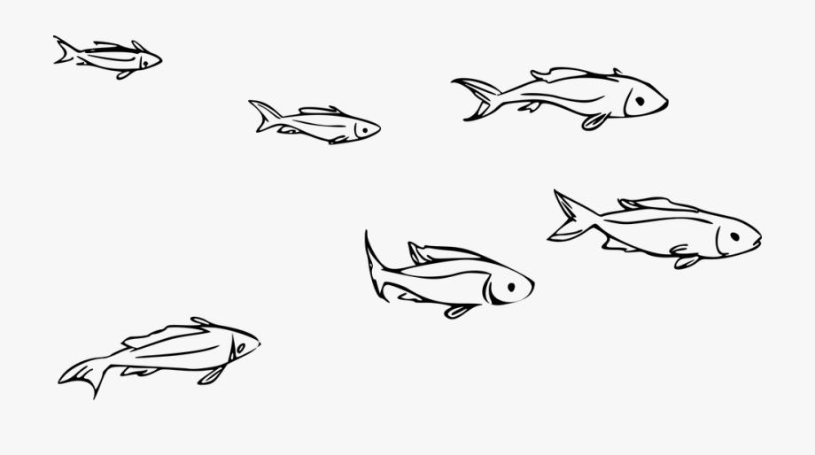 Animal fish ocean.