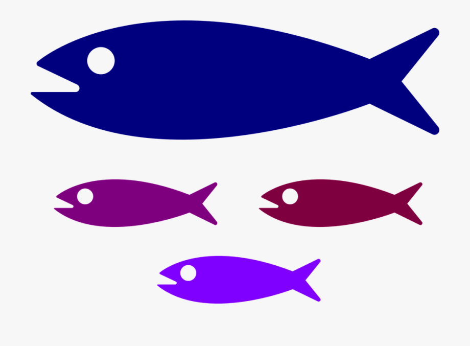 Shoal, Fish, Fish Family, Water, Kids, Swimming, Parent