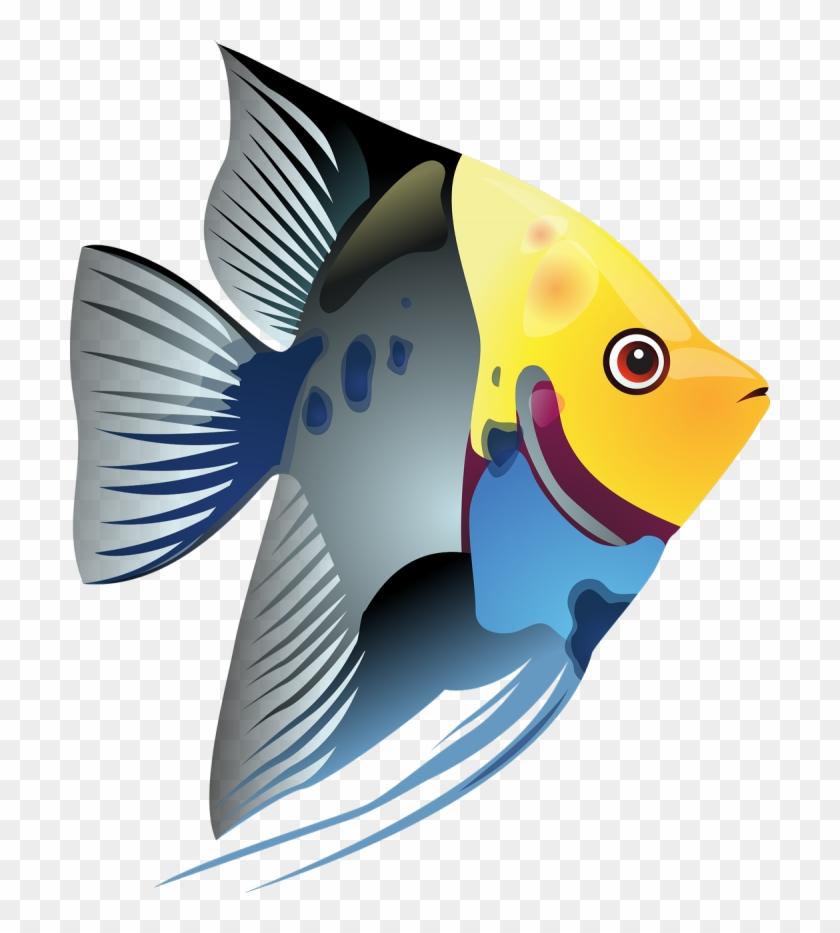 Blue angel fish.