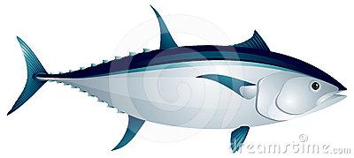 Tuna Fish Clip Art
