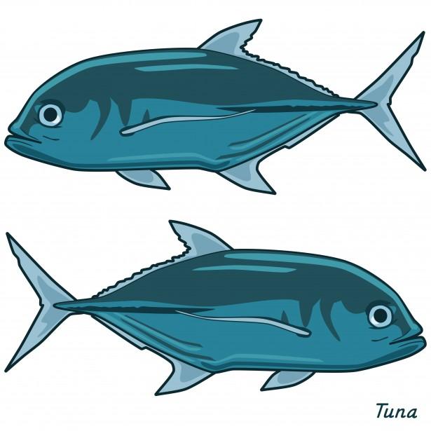 Tuna clip art.