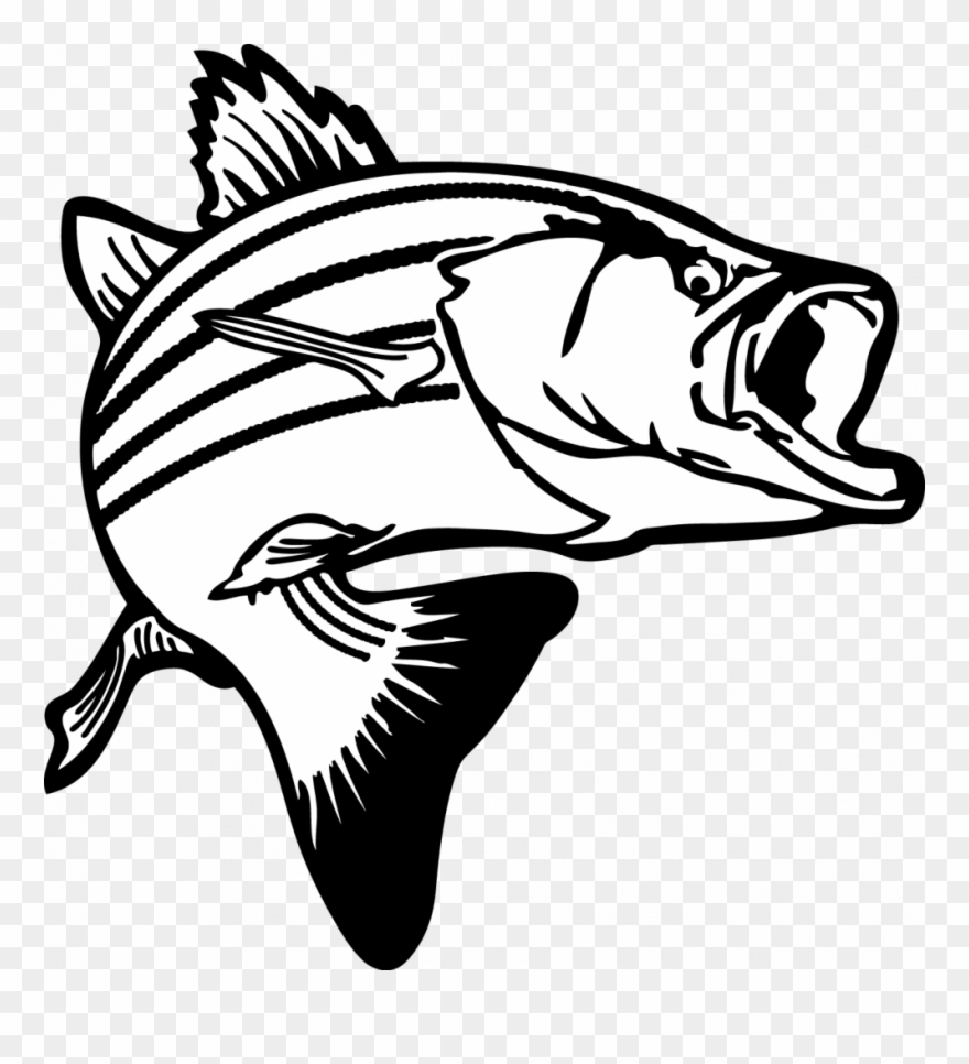 Special Fish Images Free Clip Art Jumping Bass Clipart