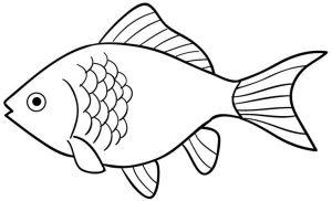 999 fish clipart.