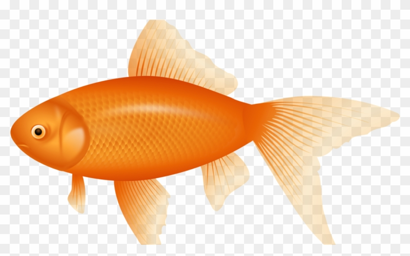 Transparent background fish.