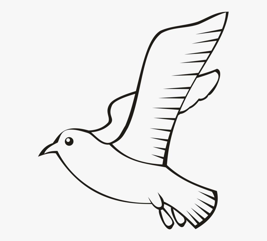 Feather Bird Beak Wing Flight