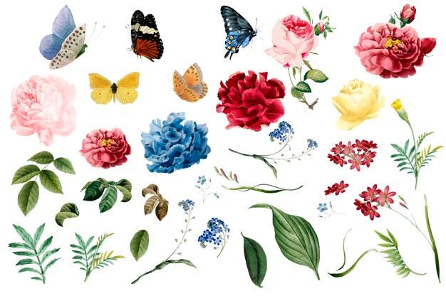 Flower vectors photos.