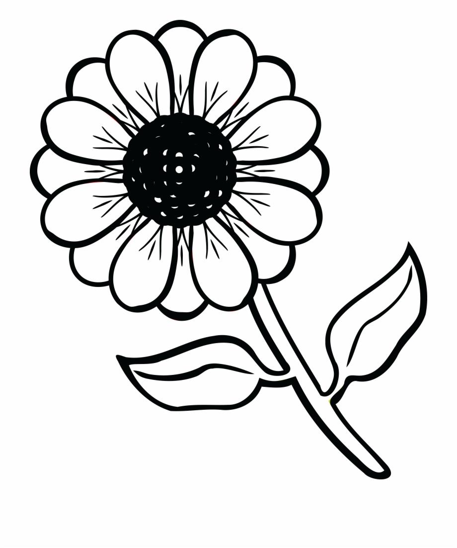 Free clipart daisy.