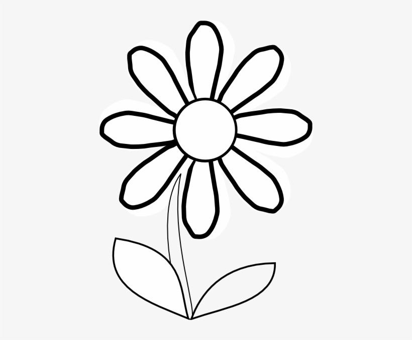 White daisy with.