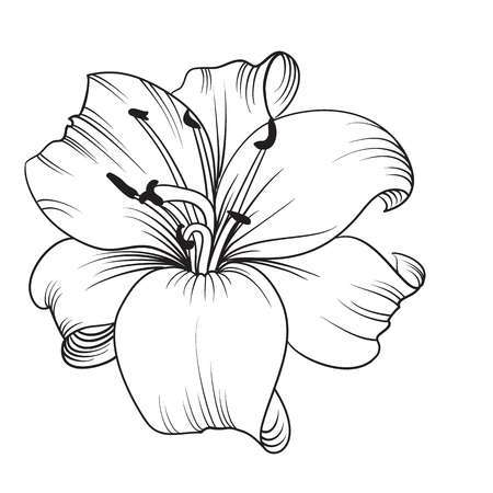 flower clipart black and white lily