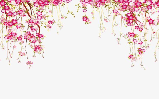 Flower border flowers.