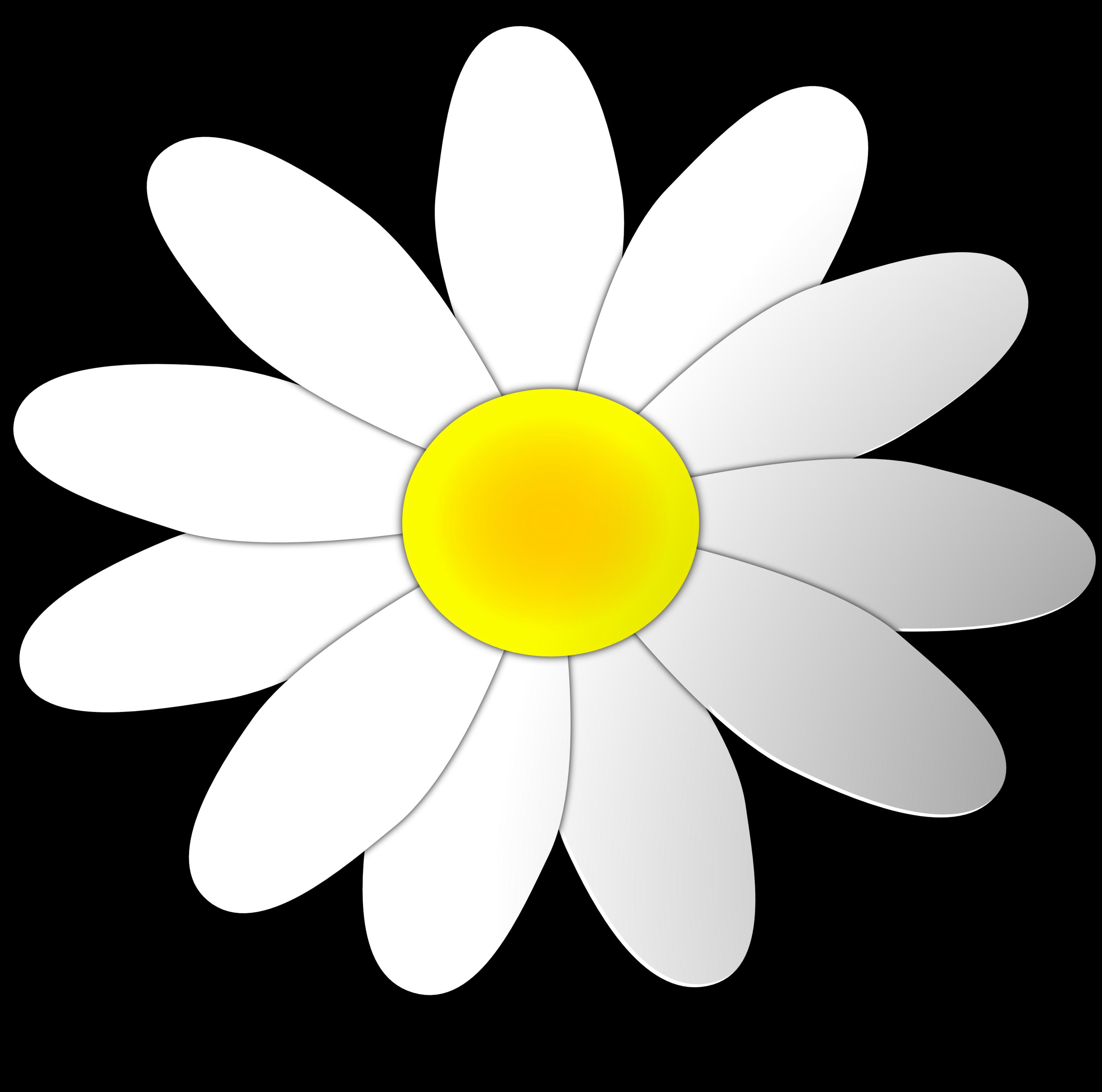 Free daisy flower.