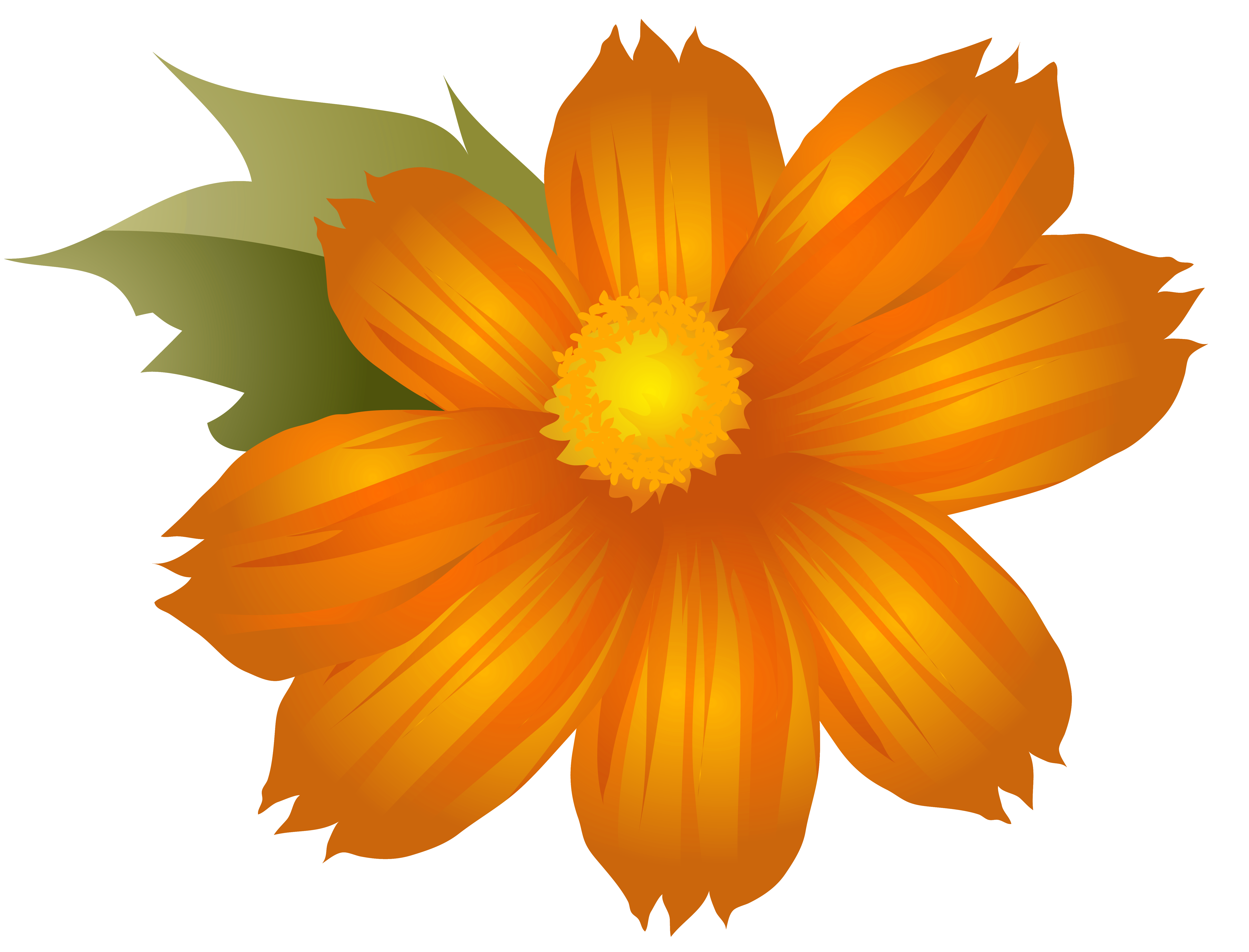 Orange flower png.
