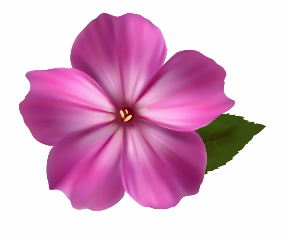 Flower Png Image Pink Clipart