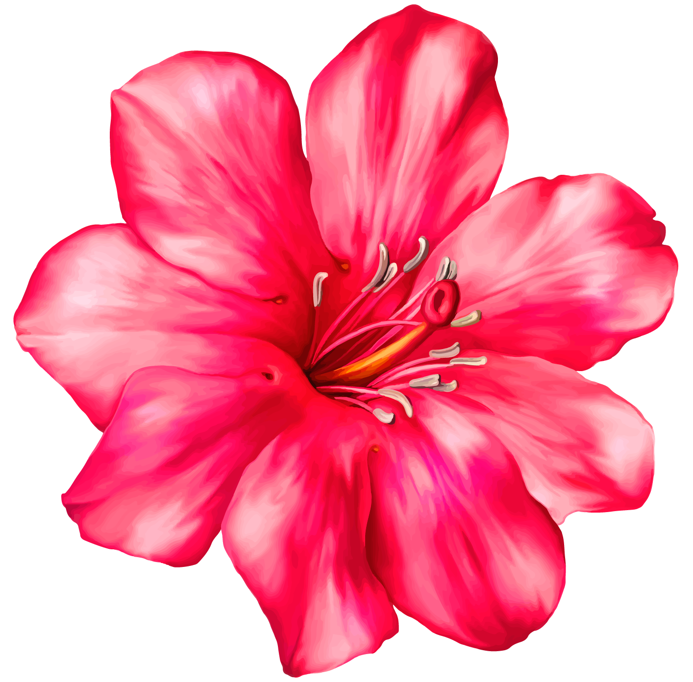 Realistic flower clipart