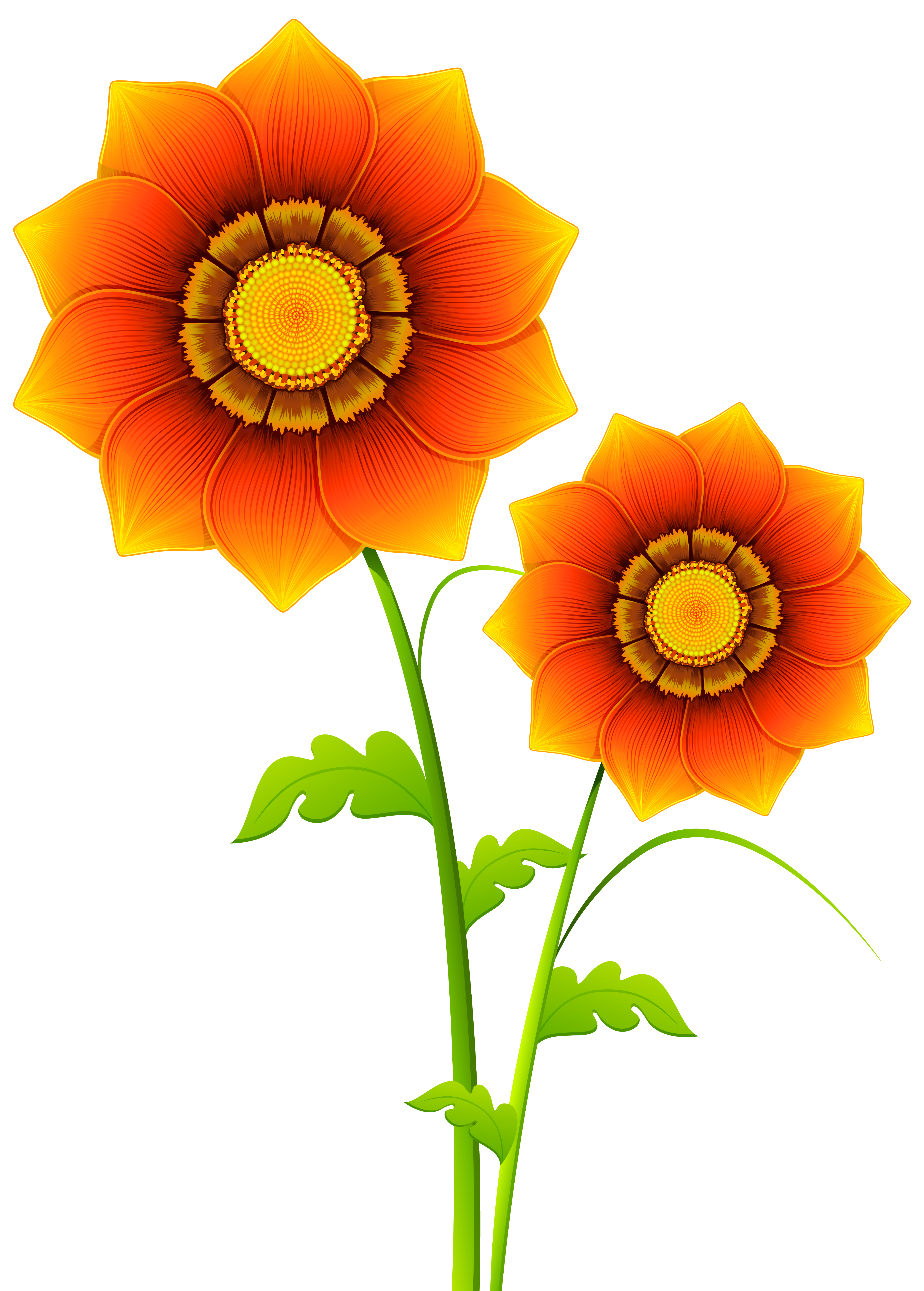 Transparent flowers clipart.