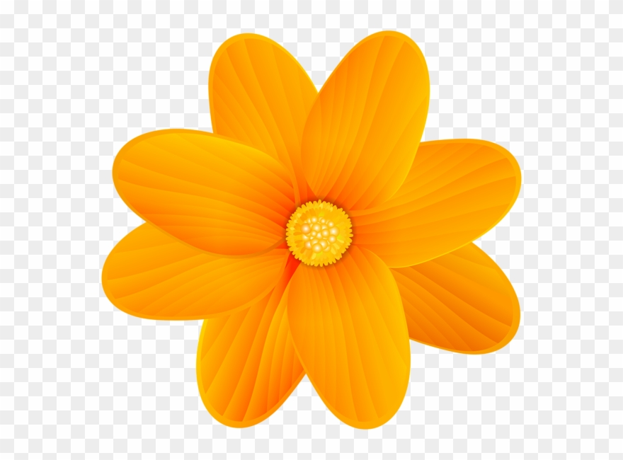 Orange Flower Png Clip Art Image