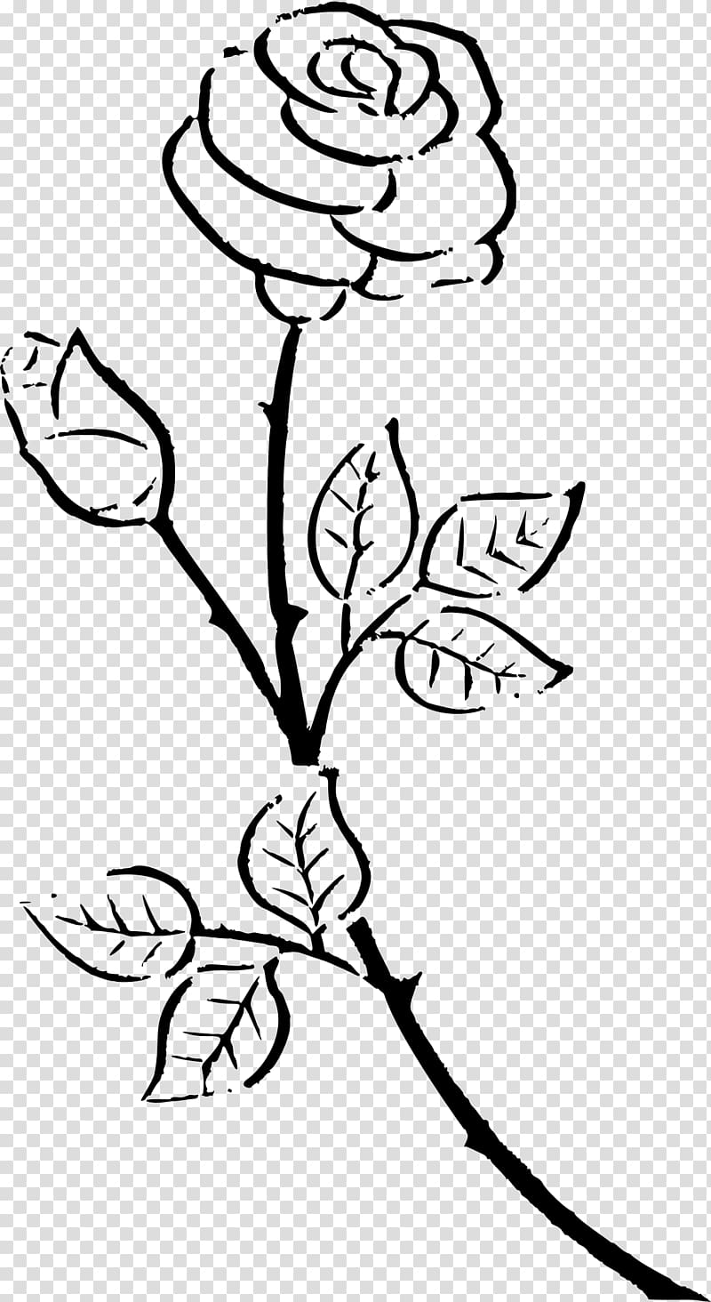 Rose outline transparent background PNG clipart