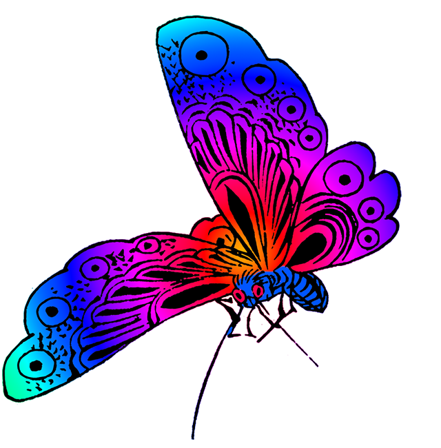 Fly clipart different color. Beautiful butterfly images