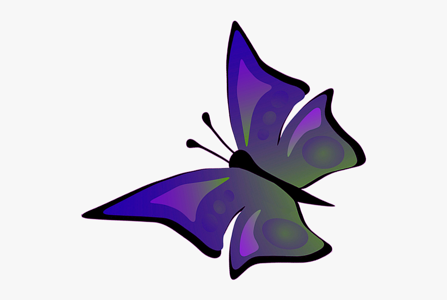 Fly clipart different color. Fly clipart different color. Flying butterfly drawings with