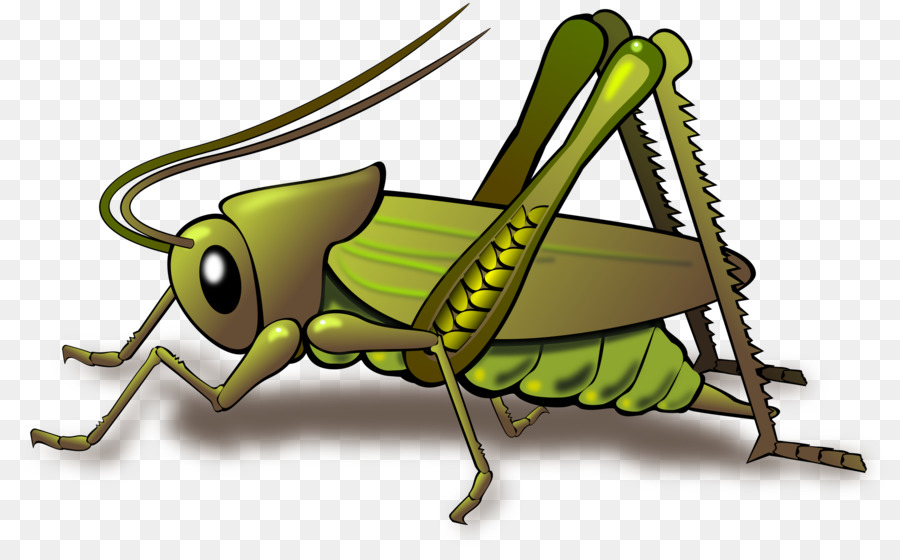 Fly clipart grasshopper. Insect clip art