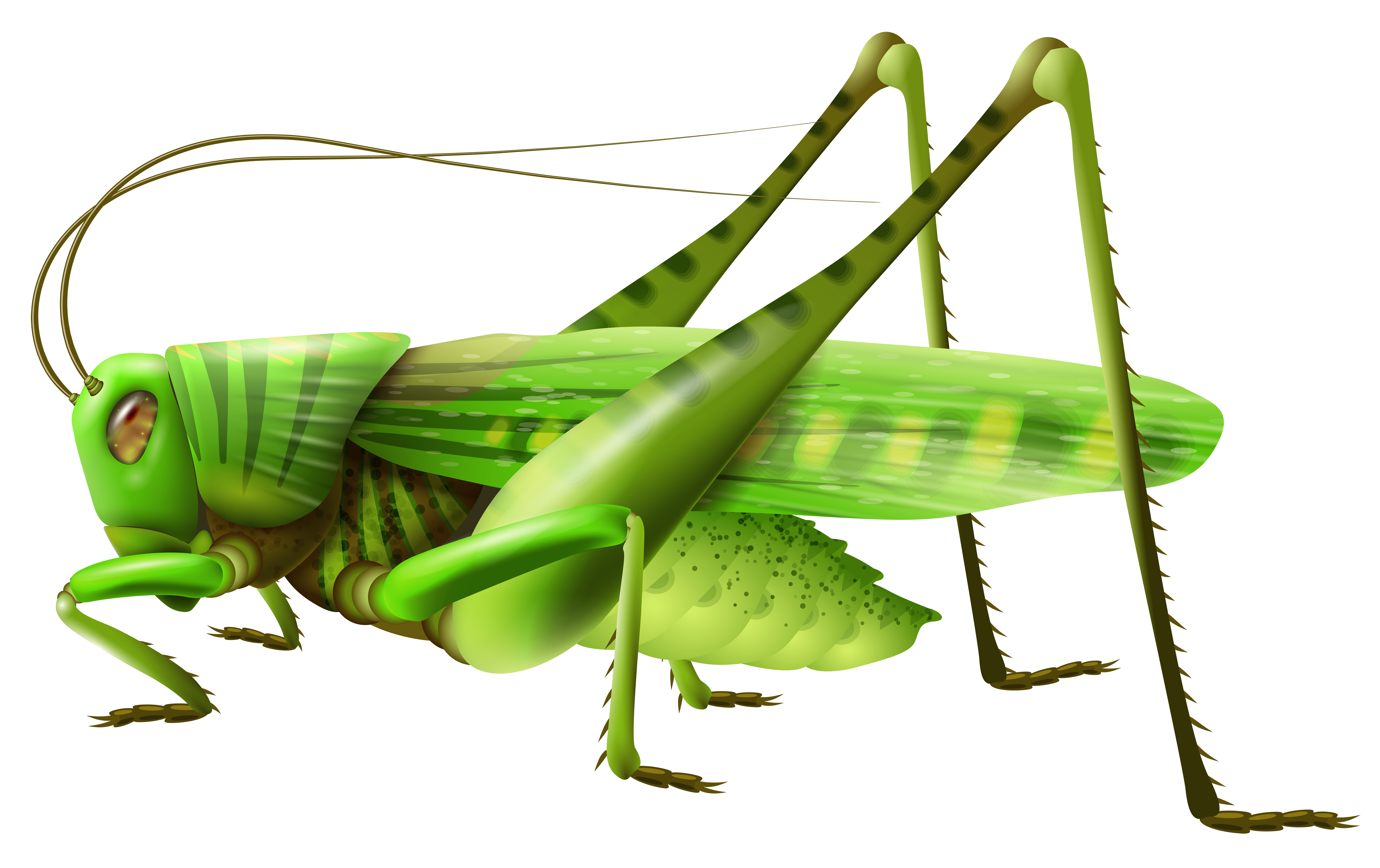 Fly clipart grasshopper. Png images free download