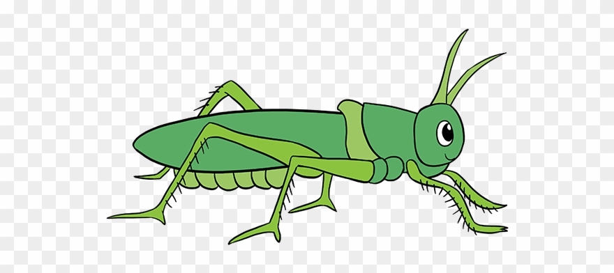 Fly clipart grasshopper. How to draw easy