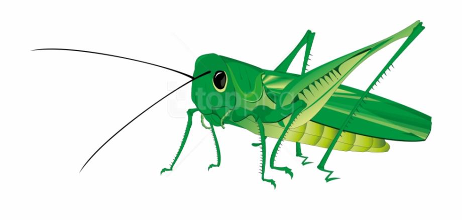 Fly clipart grasshopper. Png transparent background