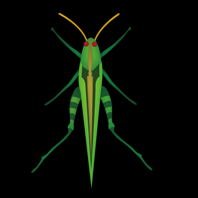 Fly clipart grasshopper. Flying transparent