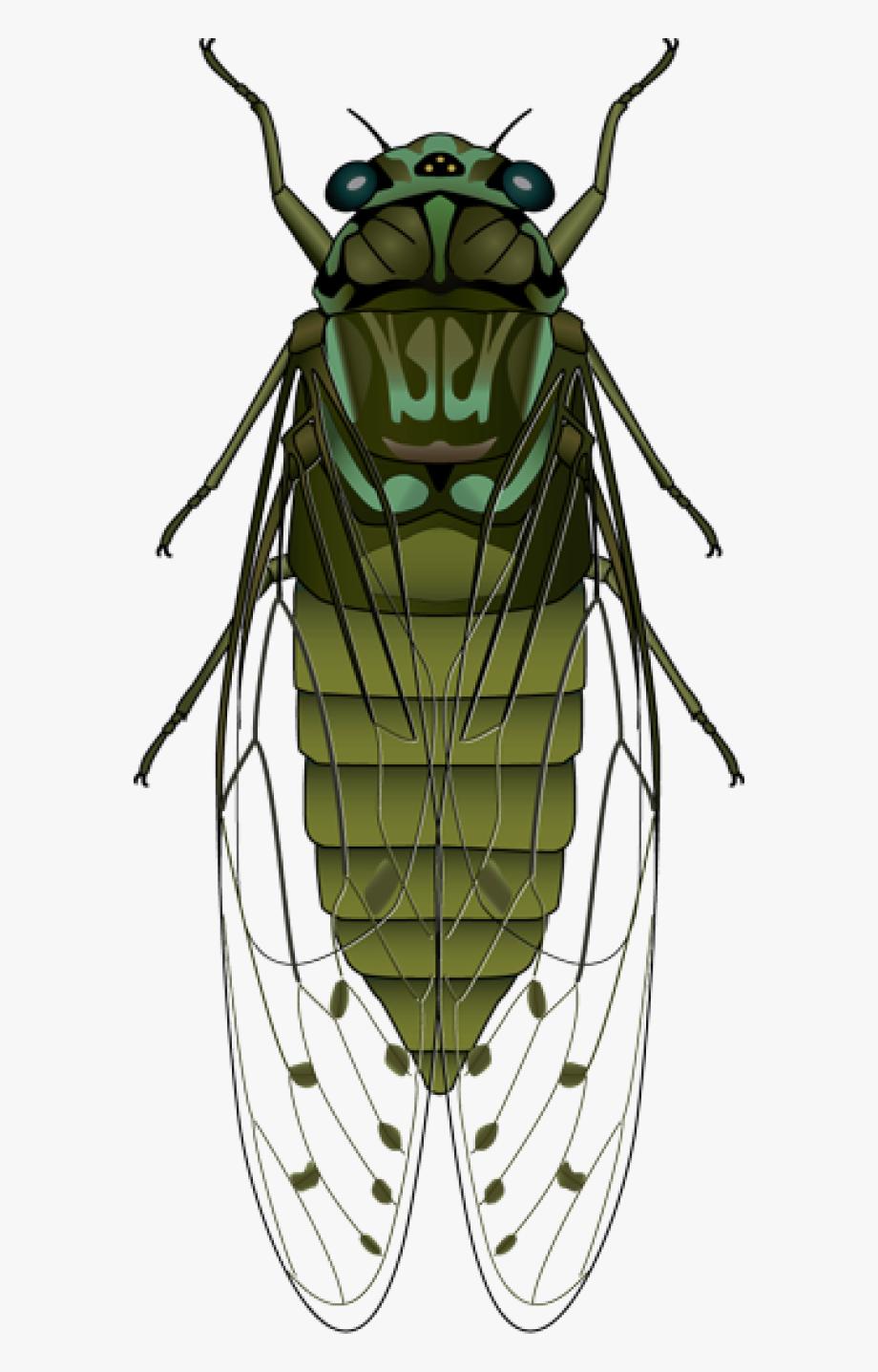 Fly clipart horsefly. Horse cicada transparent cartoon